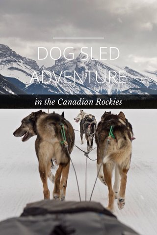 DOG SLED ADVENTURE in the Canadian Rockies