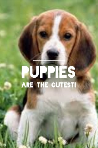 PUPPIES Are the cutest!