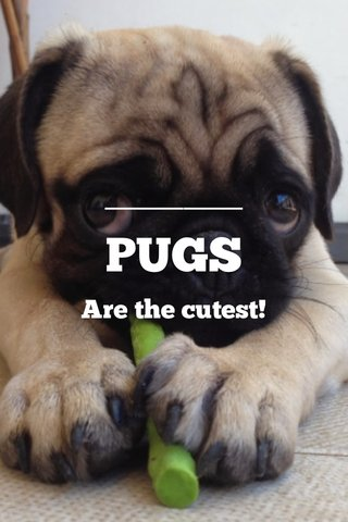 PUGS Are the cutest!
