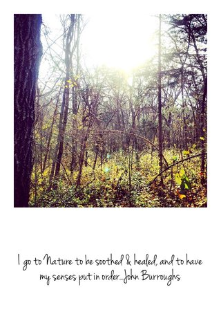 I go to Nature to be soothed & healed, and to have my senses put in order...John Burroughs