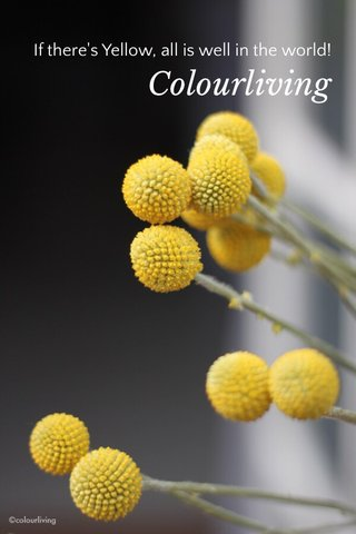 Colourliving If there's Yellow, all is well in the world!