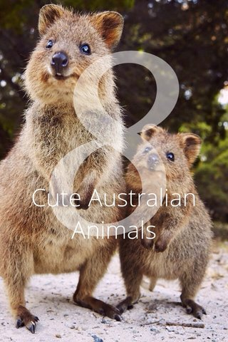 8 Cute Australian Animals
