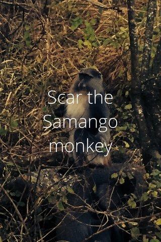 Scar the Samango monkey