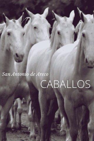 CABALLOS San Antonio de Areco