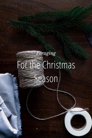 For the Christmas Season Foraging