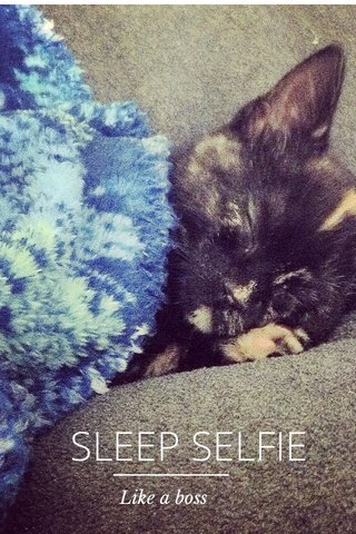 SLEEP SELFIE Like a boss