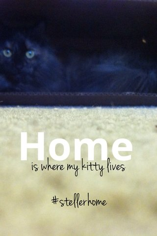 Home is where my kitty lives #stellerhome