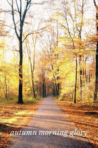 autumn morning glory
