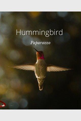 Hummingbird Paparazzo