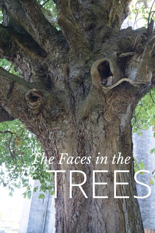 TREES The Faces in the