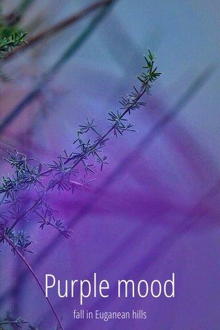 Purple mood fall in Euganean hills