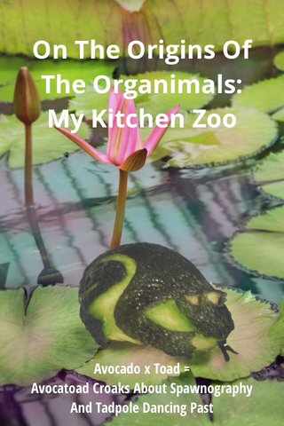 On The Origins Of The Organimals: My Kitchen Zoo Avocado x Toad = Avocatoad Croaks About Spawnography And Tadpole Dancing Past