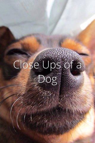 Close Ups of a Dog