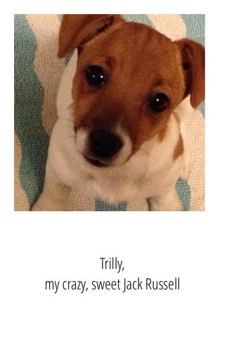 Trilly, my crazy, sweet Jack Russell