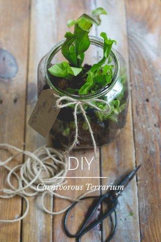 DIY Carnivorous Terrarium