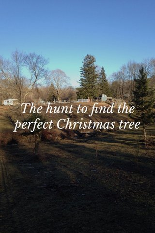The hunt to find the perfect Christmas tree