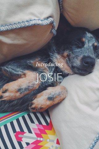 JOSIE Introducing