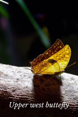 Upper west buttefly
