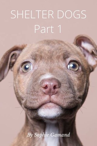 SHELTER DOGS Part 1 By Sophie Gamand