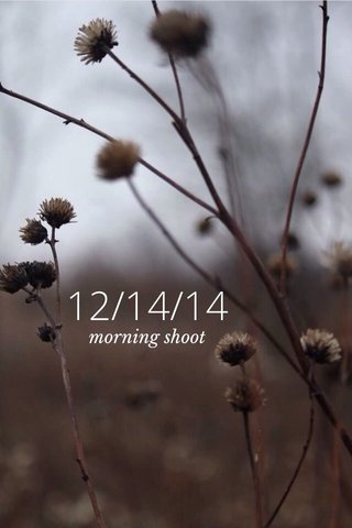 12/14/14 morning shoot