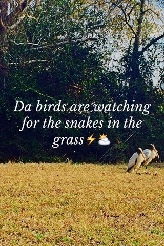 Da birds are watching for the snakes in the grass⚡️⛅️