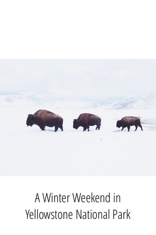 A Winter Weekend in Yellowstone National Park
