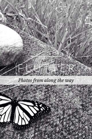 FLUTTER Photos from along the way