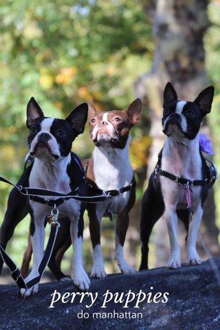 perry puppies do manhattan