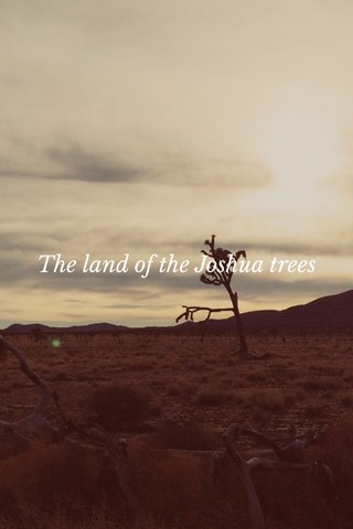 The land of the Joshua trees