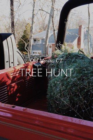 TREE HUNT Old Mystic, CT