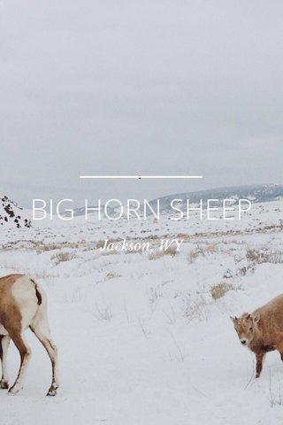 BIG HORN SHEEP Jackson, WY