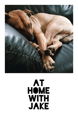 At Home With Jake