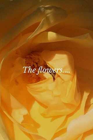 The flowers....