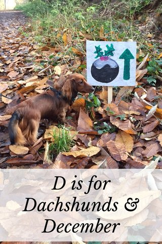 D is for Dachshunds & December
