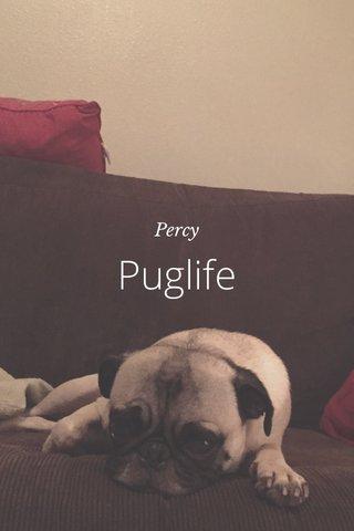 Puglife Percy