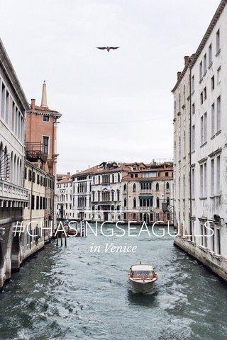#CHASINGSEAGULLS in Venice