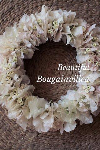 Bougainvillea Beautiful