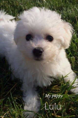Lulu My puppy