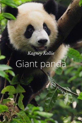Giant panda Kagney Kollie