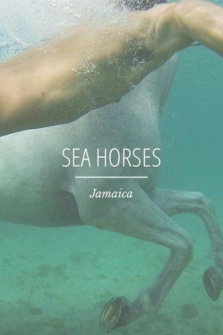 SEA HORSES Jamaica
