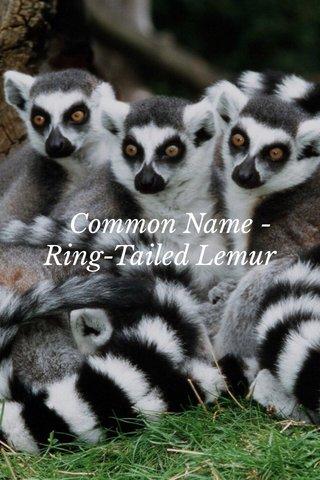 Common Name -Ring-Tailed Lemur