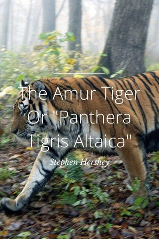 "The Amur Tiger Or ""Panthera Tigris Altaica"" Stephen Hershey"