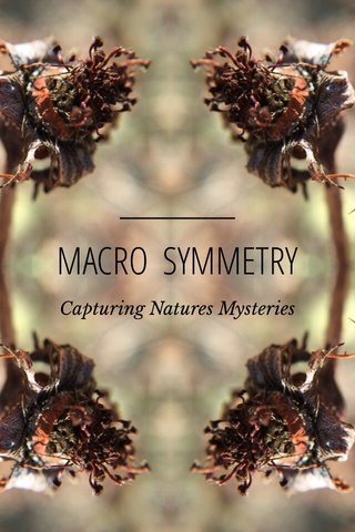 MACRO SYMMETRY Capturing Natures Mysteries