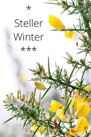 * Steller Winter ***