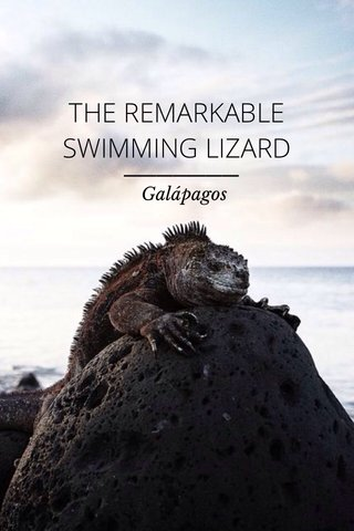 THE REMARKABLE SWIMMING LIZARD Galápagos