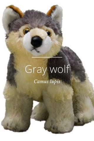 Gray wolf Camus lupis