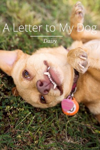 A Letter to My Dog Daisy