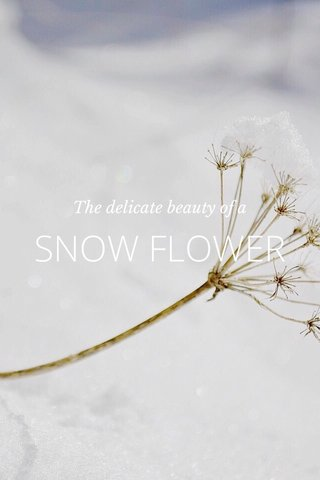 SNOW FLOWER The delicate beauty of a