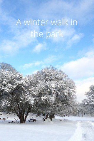 A winter walk in the park