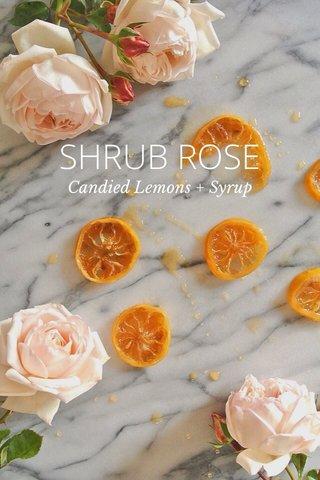 SHRUB ROSE Candied Lemons + Syrup